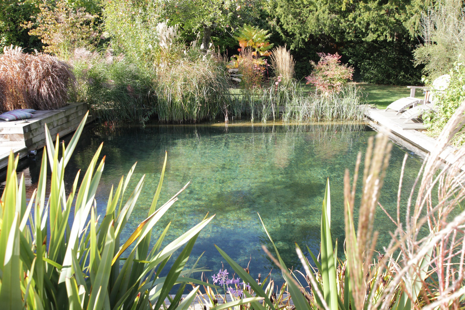 Natural Swimming Ponds With Chemical Free Water Clear