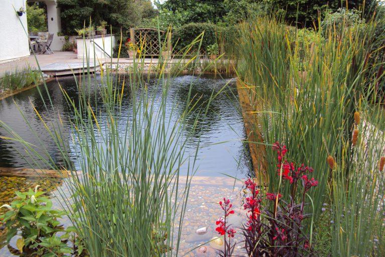 Freeform natural swimming pool
