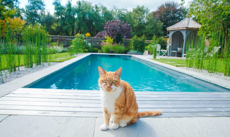 Chemical free pool ft. Cat
